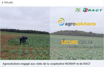 RAGT Semences s'associe à Agrosolutions et à la coopérative Noriap  pour redynamiser la culture du colza
