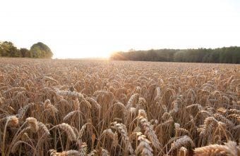 Accord de coopération de recherche entre RAGT et Bayer Crop Science